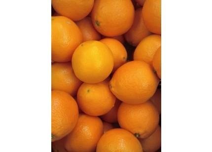 Orange Navelina Saft 14kg