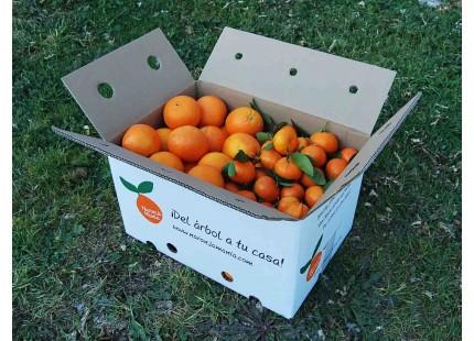 Mischkartons 14 kg: (10kg) Orange Navelina Saft + (4kg) Mandarine Clemenules