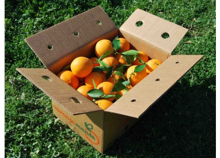 Orange Valencia Lane Tafel + Valencia Late Saft 20kg
