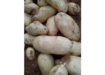 Neue Kartoffel 10kg