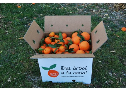 Mischkartons 20 kg: (13kg) Orange Navel Lane-Late Tafel + (7kg) Mandarine Tardia