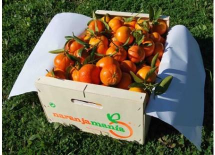 Mandarinen Mini Box 10kg