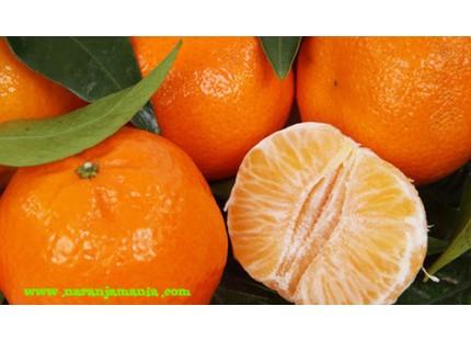 Mandarine Loretina 15kg