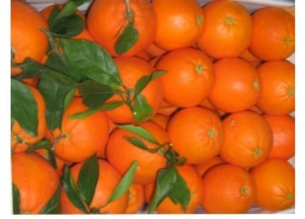 Mischkartons 9kg orangen tafel + Mandarinen