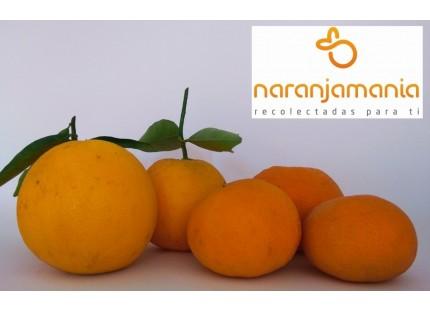 Valencia Spät von Saft + Tangerine Late 19kg