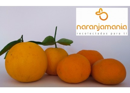 Valencia Tisch spät und spät Tangerine 19kg