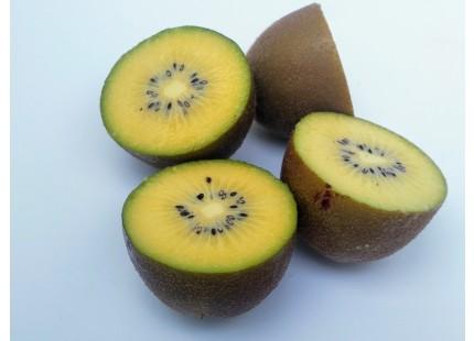 Gelbe Kiwi 5kg