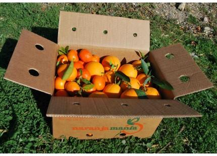 Mischkartons 15 kg: (10kg) Orange Navelina Tafel + (5kg) Mandarine Clemenules