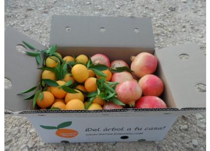 Gemischte Schachtel - 20kg Granatapfel Mollar und Mandarine Clemenules