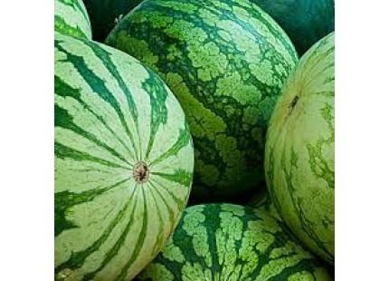 Wassermelone ohne Samen