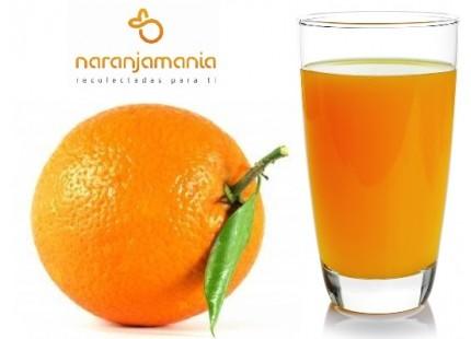 Orange für Saftmaschine C6-7 19kg