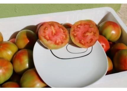 Traditionelle valencianische Tomate 5kg mittlerer Größe