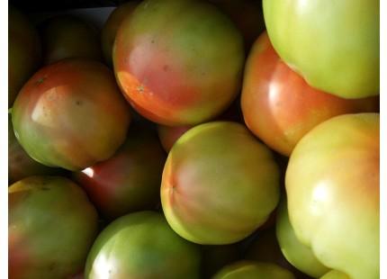 Traditionelle Valencian Tomate 10kg mittlerer Größe.
