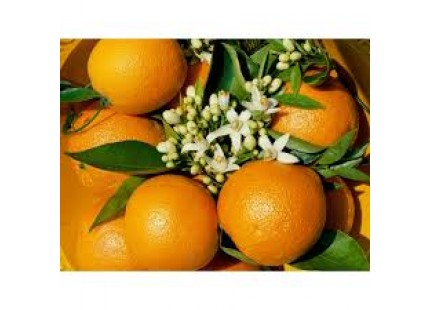 Orange Valencia Lane Saft 20kg