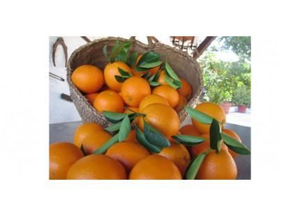 Orange Valencia Lane Tafel + Valencia Late Saft 14kg