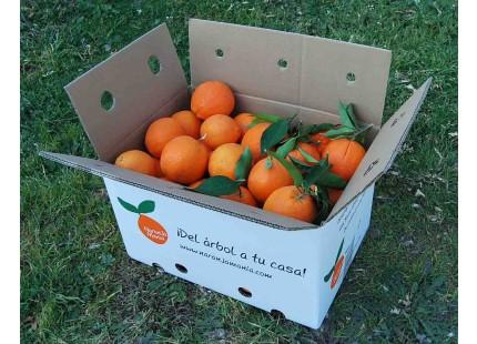 Orangen Navelina Tisch + Navelina Saft 9kg