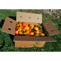 Mischkartons 15 kg: (10kg) Orange Navel Lane-Late Saft + (5kg) Mandarine Tardia