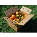 Mixed Box 20kg Orangensaft (15kg) + Zucchini (5kg)