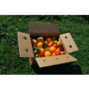 Mischkartons 15 kg: (10kg) Orange Navel Lane-Late Tafel + (5kg) Mandarine Tardia