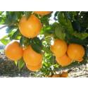 Orangen, ohne 20kg Box zu wählen