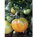 Optimale Tomate 1kg