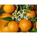 Orange Valencia Lane Tafel 15kg
