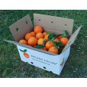 Orange Lane-Late Tafel + Lane Late Saft 10kg