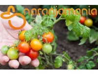Cherry tomate 1kg