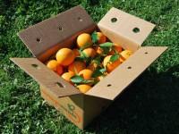Orange Valencia Lane Saft 9kg