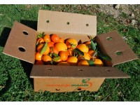 Mischkartons 15 kg: (10kg) Orange Navel Lane-Late Saft + (5kg) Mandarine Tardia