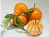 Mandarine Tardia 5kg