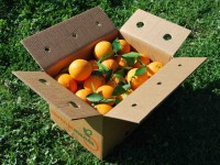 Orange Lane-Late Tafel 5kg