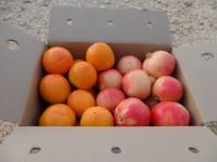 Gemischte Schachtel - 15kg Granatapfel Mollar und Kaki Persimon