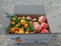 Gemischte Schachtel - 9kg Granatapfel Mollar und Clementine