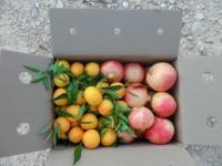 Gemischte Schachtel 14kg Granatapfel Mollar und Clementine