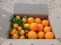 Schachtel 14kg Kaki Persimon und Clementine