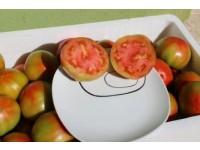 Optimale Tomate 5kg mittlerer Größe.