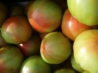 Valencianische traditionelle Tomate 15kg mittlerer Größe