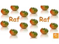Raf tomaten 1kg