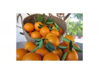 Orange Valencia Lane Tafel 9kg