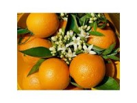 Orange Valencia Lane Tafel + Valencia Late Saft 15kg