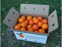 Orange Lane-Late Saft 14kg